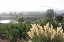 Beautiful misty morning at Viñas El Encanto