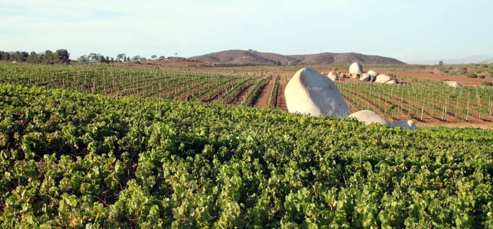 Discover Our Wines