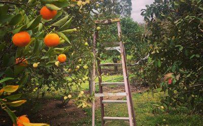 It's Citrus Season